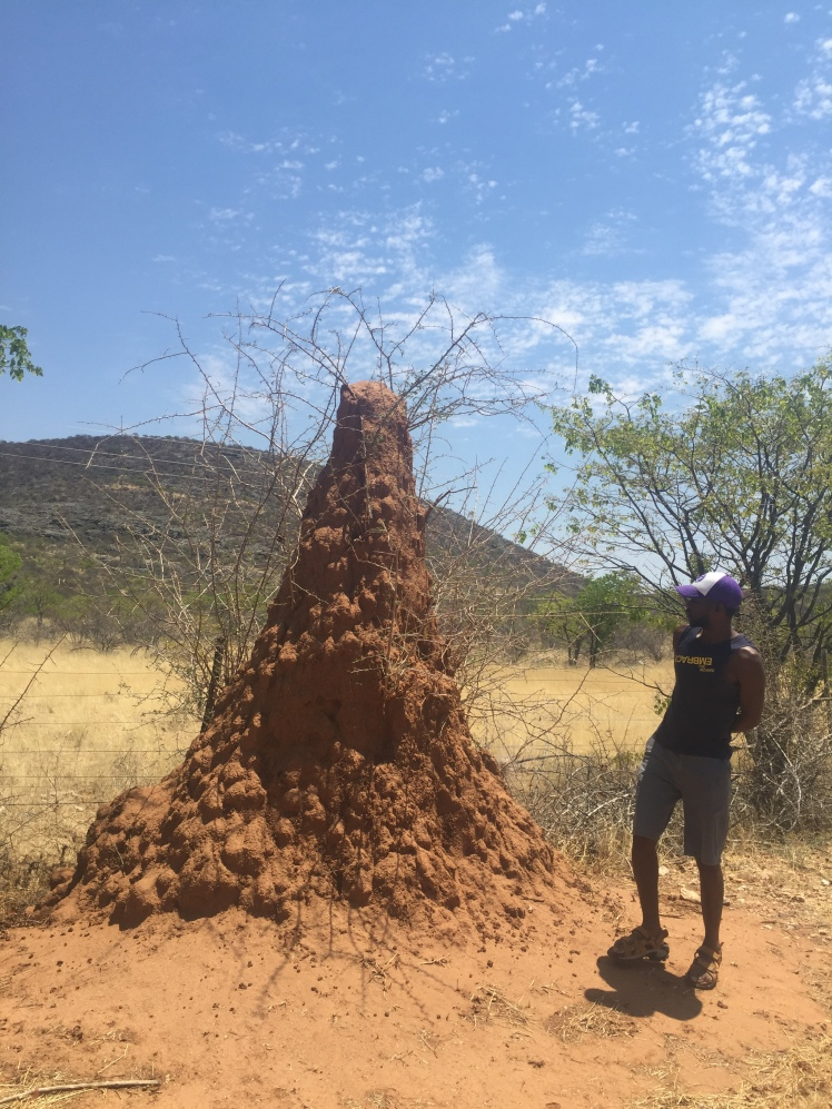 Termite mounds in Namibia.